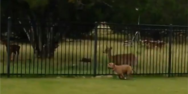 Viral Video: This Dog and a Deer Playing and Racing Each Other is the Best Thing in the Internet Today