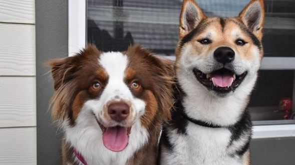 Owner captures adorable footage of two dog best friends reuniting after a year apart