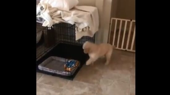 Dog's reaction after barking for the 'first time' makes people giggle. Watch viral clip