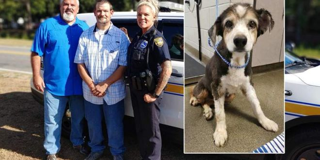Good Samaritan recognized for helping rescue 16-year-old dog abandoned in Westside dumpster