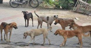 To tackle stray dog menace, PMC to set up 7 sterilisation centres