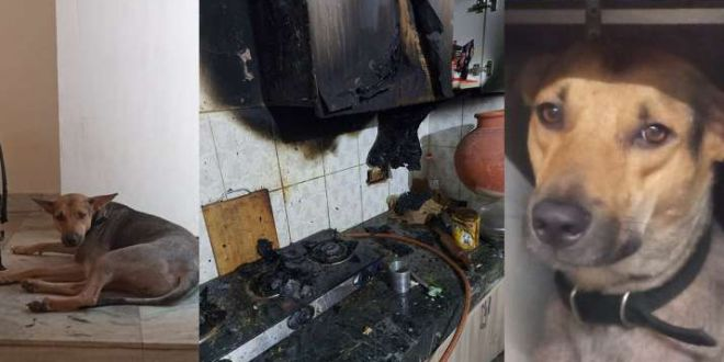 Pet dog saves family from fire in Greater Noida, raises alarm in nick of time