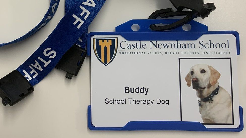 Dog In Bedford Helps Children In School Deal With Anxiety
