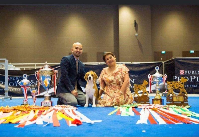 A Beagle Wins Top Philippine-born Dog Award