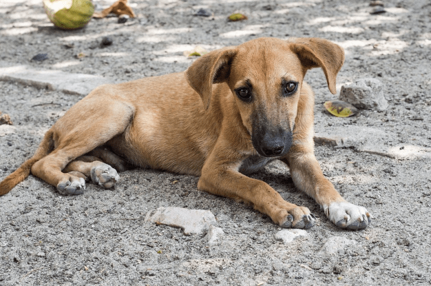 5 Best Reasons Why You Should Adopt Stray Dogs