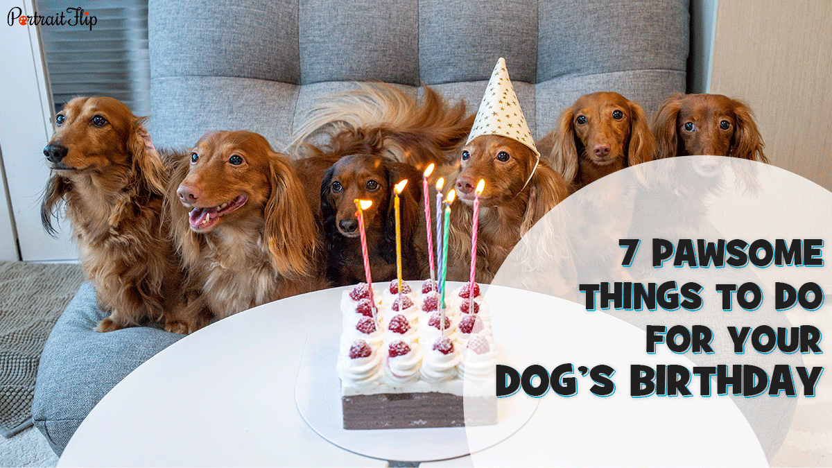 7 Pawsome Things To Do For Your Dogs Birthday