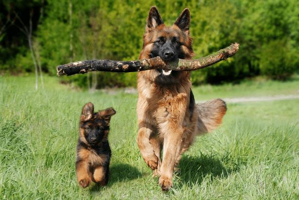Exercising & Training is essential