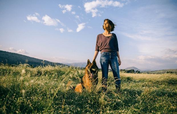 Grooming the German Shepherds