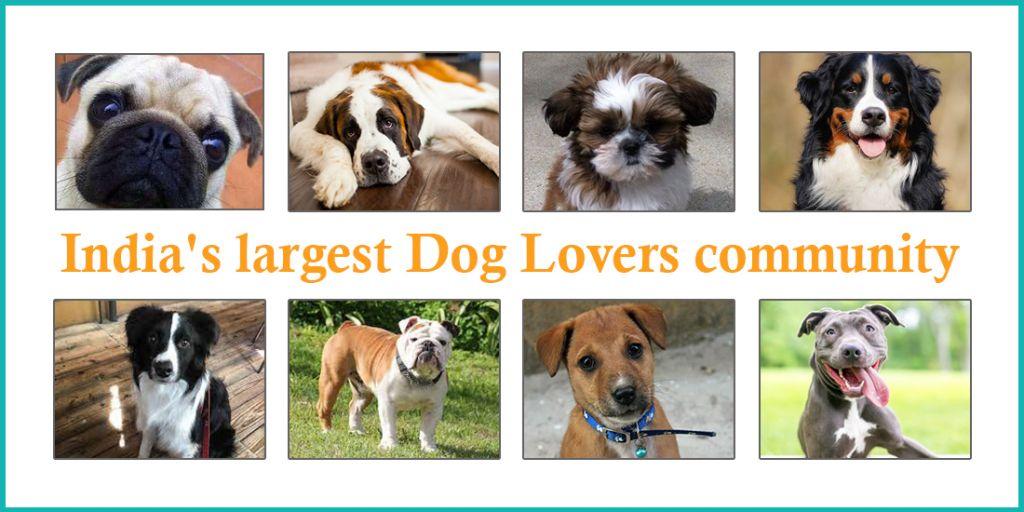 Celebrating_Dog_Love