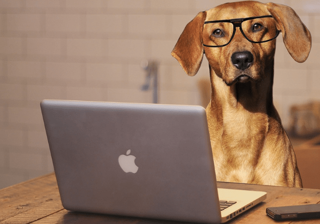 Home-Run Pet Startups That Are Giving Big-Chains a Run for Their Money