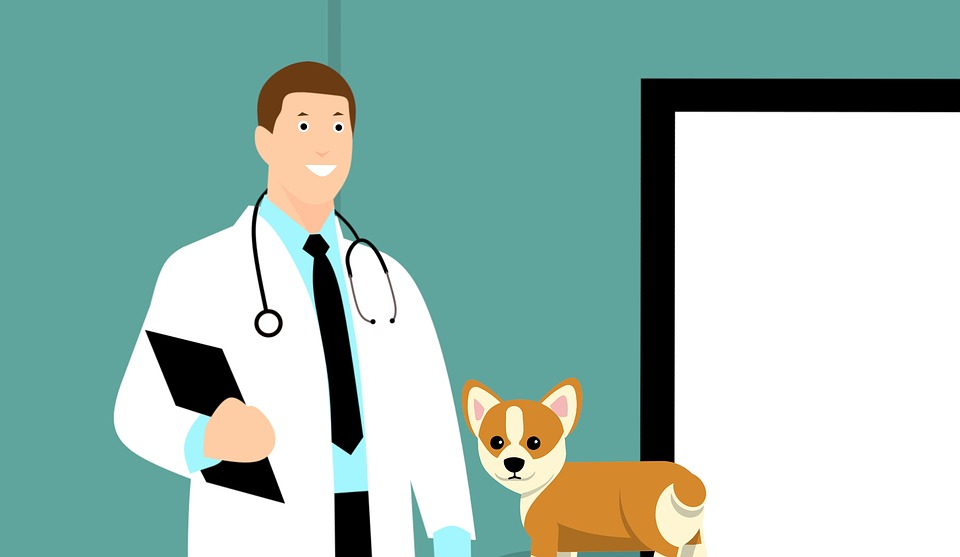How to Go to Vet School and Become a Veterinarian