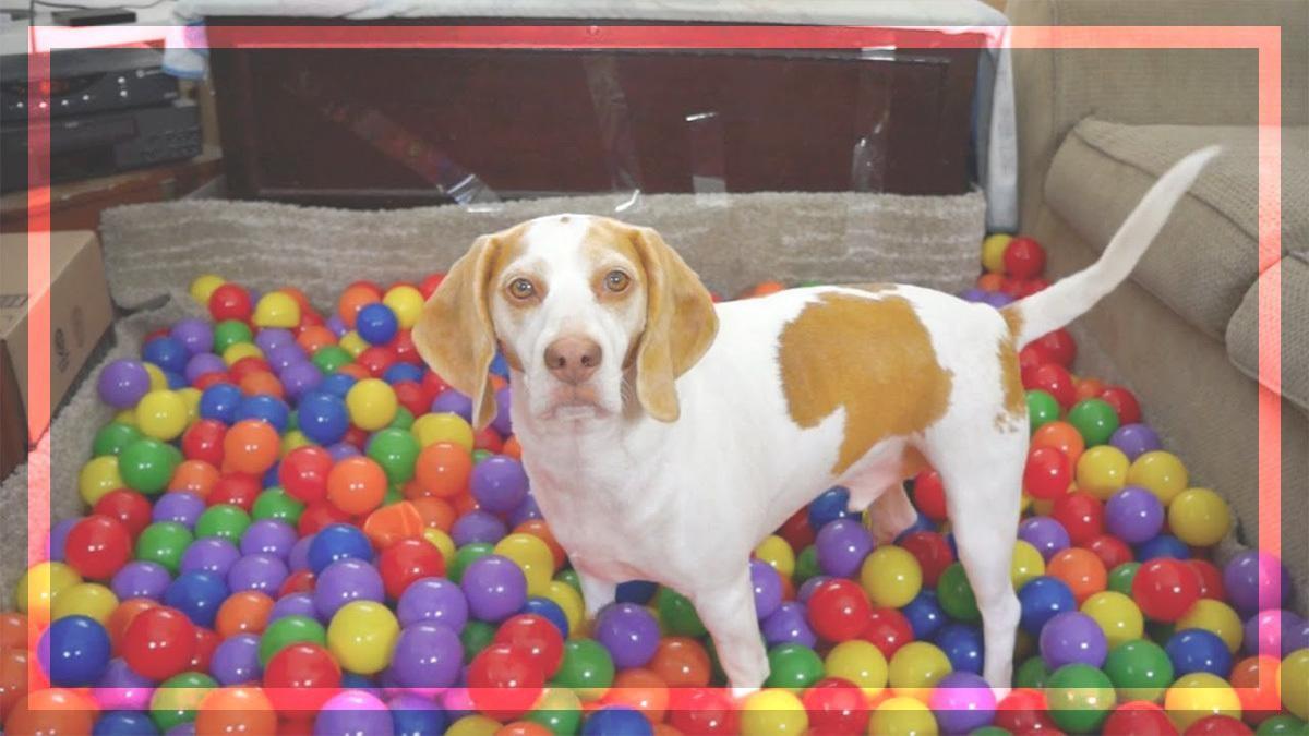 Puppy Ball Pit