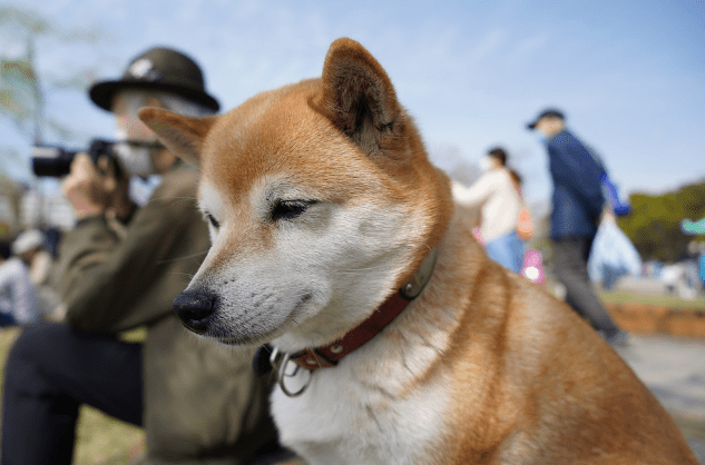 Ten Low Maintenance Dog Breeds