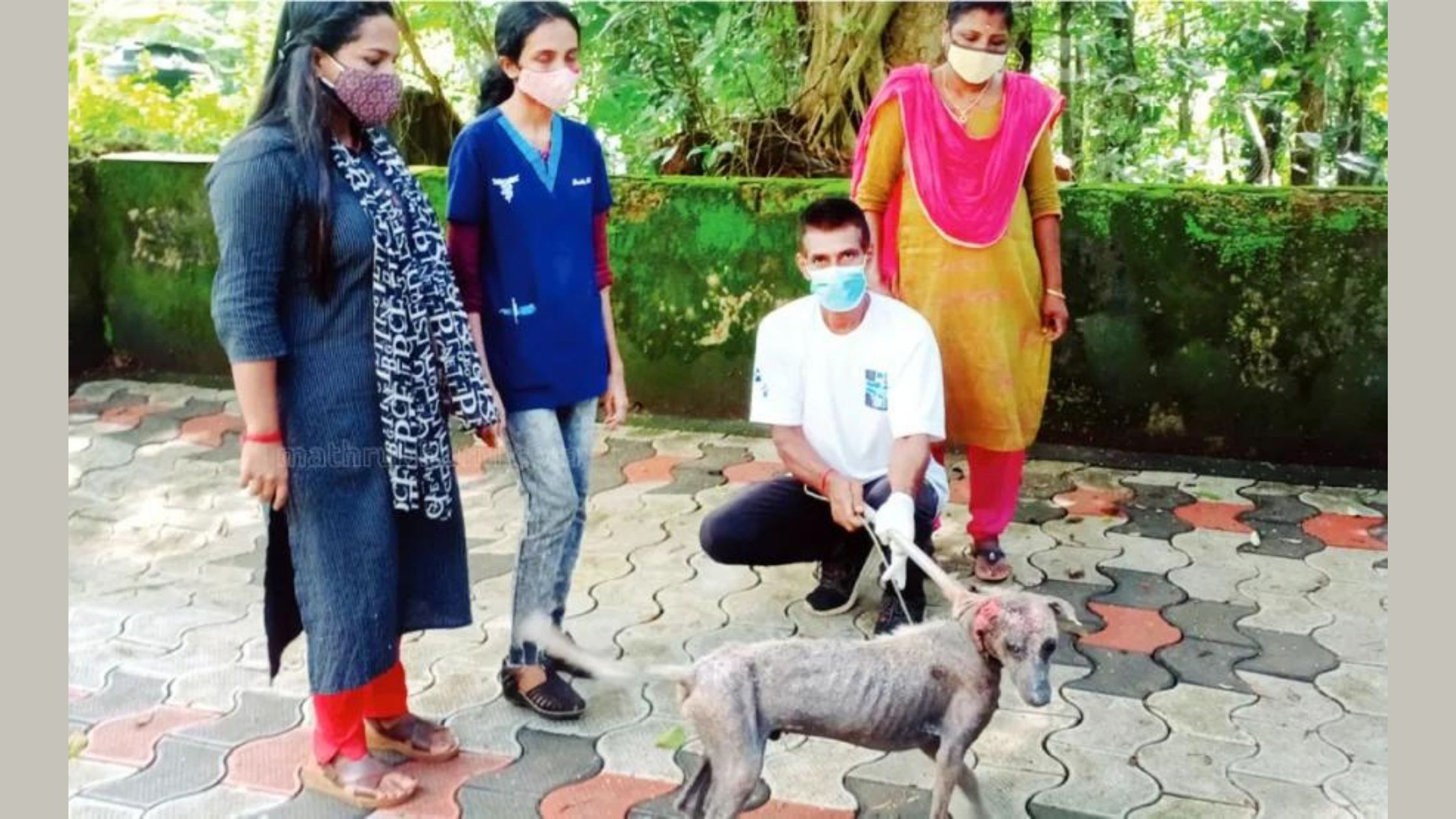 Dog saved from death by social workers in Kottayam, India