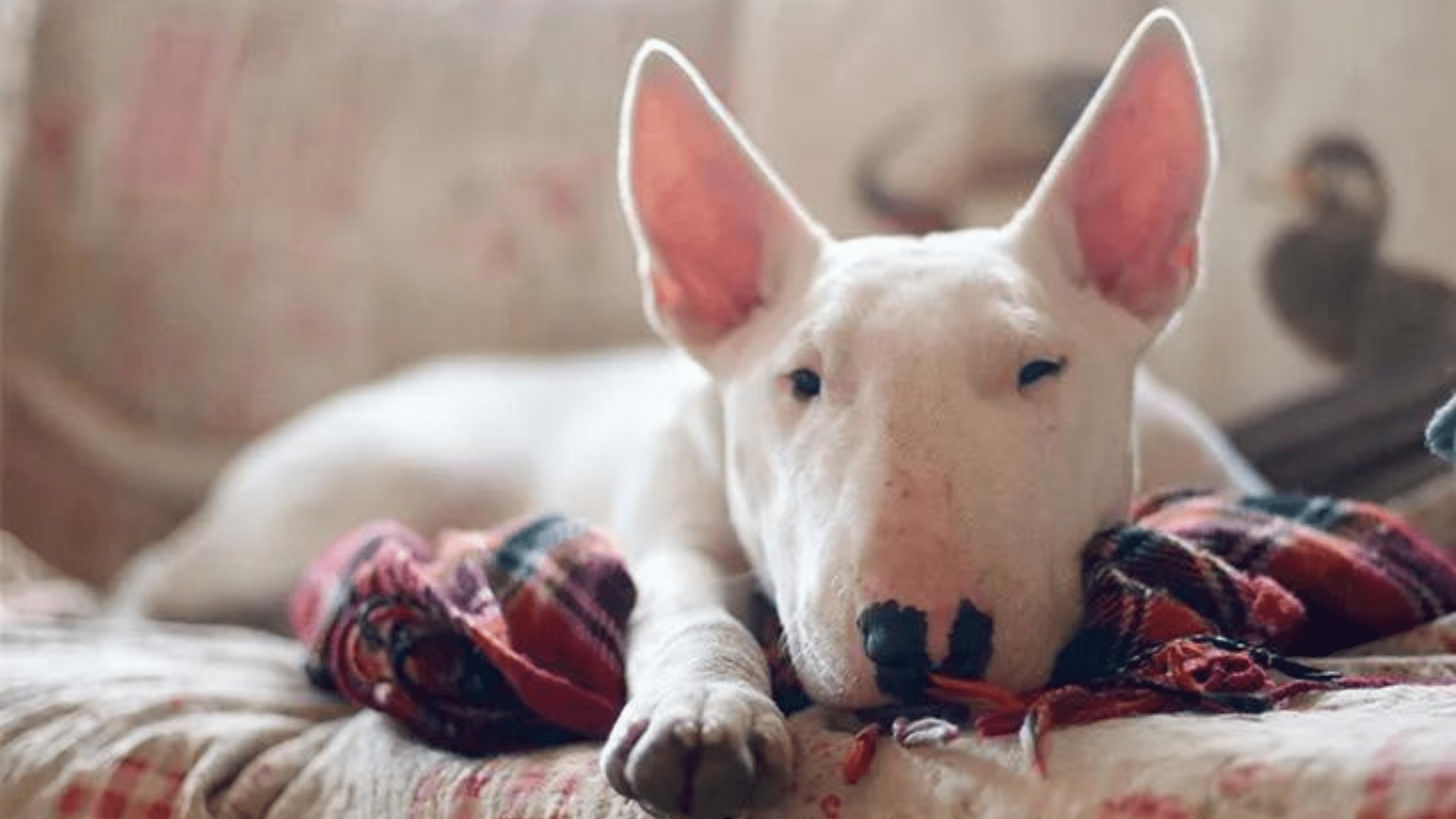 Top 5 Most Stubborn Dog Breeds