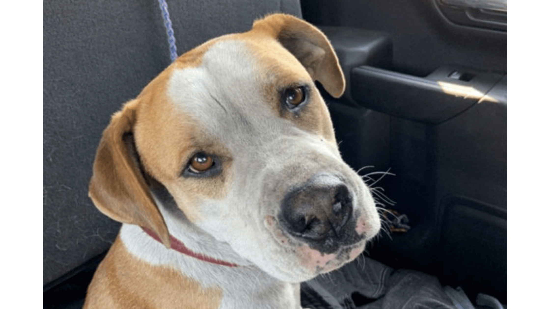 SPCA trying to find dog's owner after Lytton fire