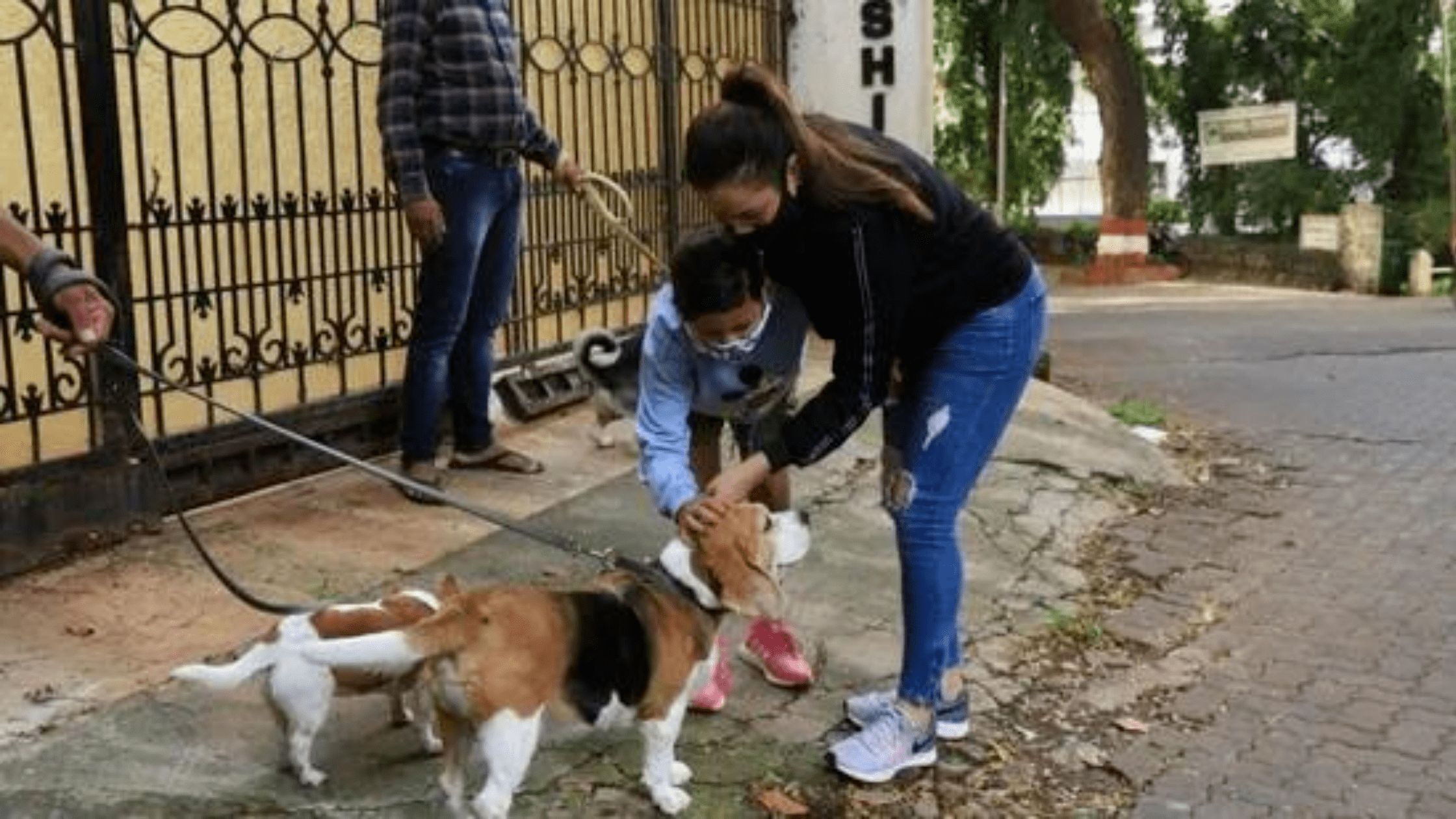 Delhi High Court passes new rules for citizens to feed stray dogs