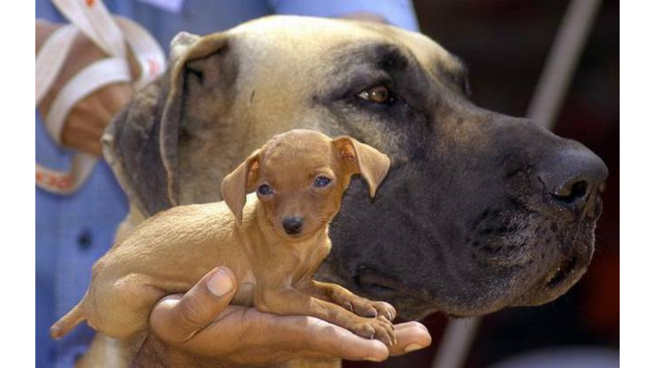 AWBI To Act Against Illegal dog breeding