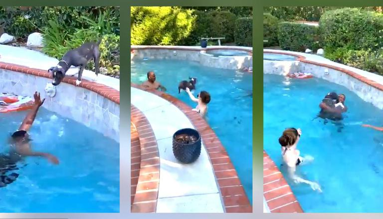 Dog Rushes To Save His Human From Drowning | Viral Video