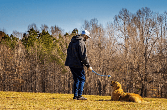 10 Dog Breeds That Are Easiest To Potty Train | DogExpress