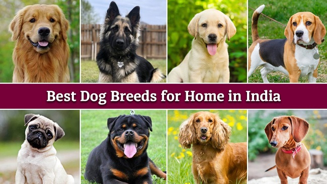 Best Indian Breeds to Adopt On International Dog Day 2021