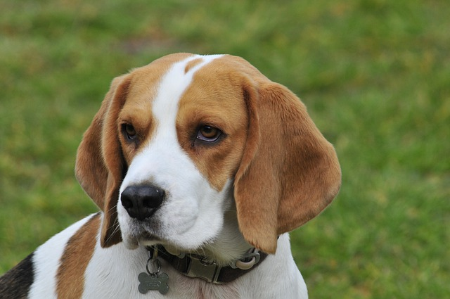 How Can I Treat My Dog's Skin Allergies