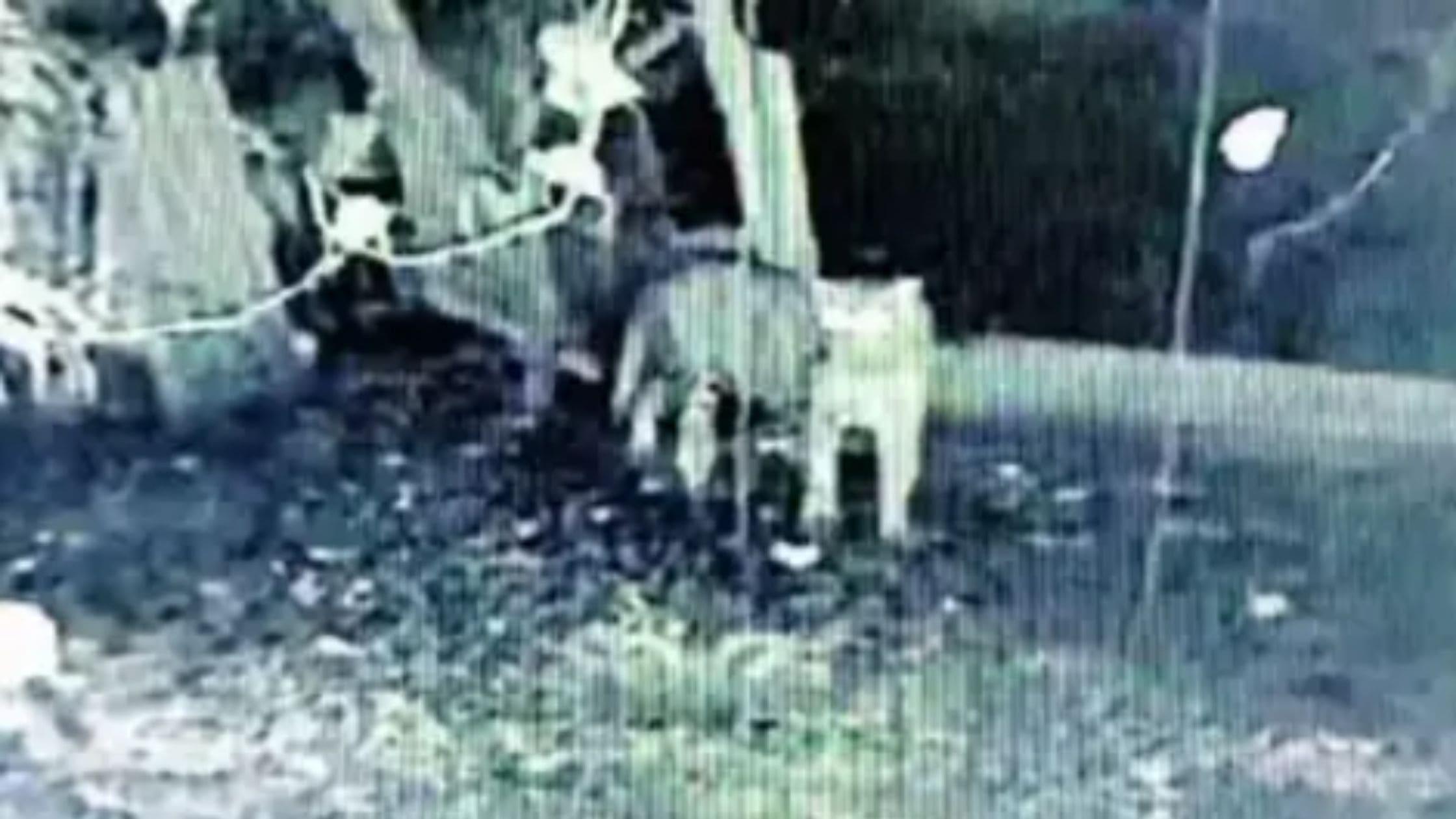 Leopard Spotted Near Panhala Fort Kills A Pet Dog