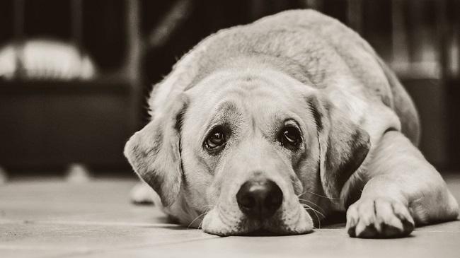 Rural Australian Town Kills Dogs Fearing Spread Of Coronavirus