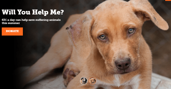 Society for the Prevention of Cruelty to Animals (SPCA)