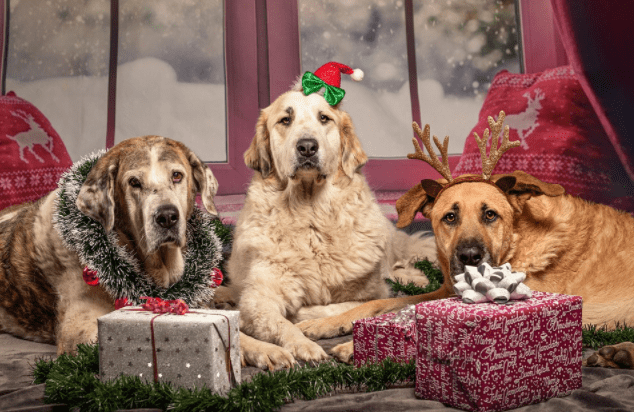 The Scientific Reason You Should Stop Buying Gifts For Humans And Shop For Your Dog