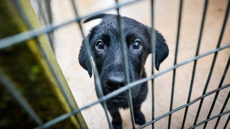 UK Cracksdown on Puppy Smuggling By limiting Dog Imports