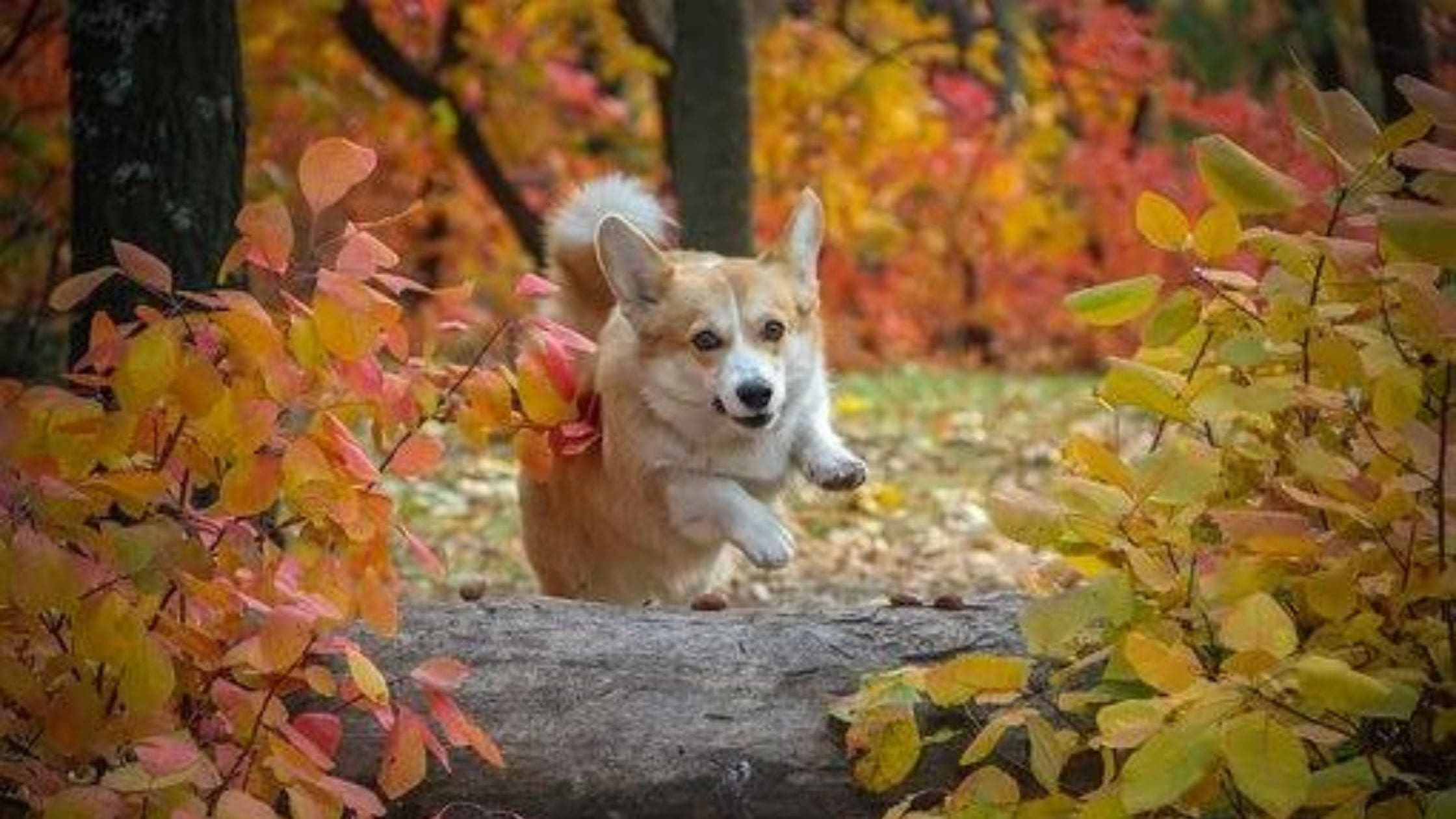 10 Super Impressive Tricks Any Dog Can Learn