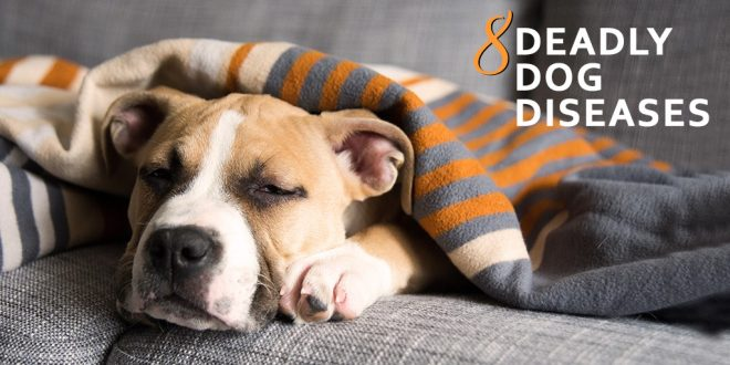 8 Most Common Deadly Dog Diseases