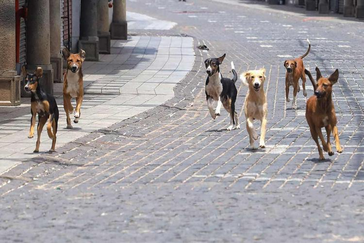 300 dogs found allegedly dead in Andhra Pradesh, India