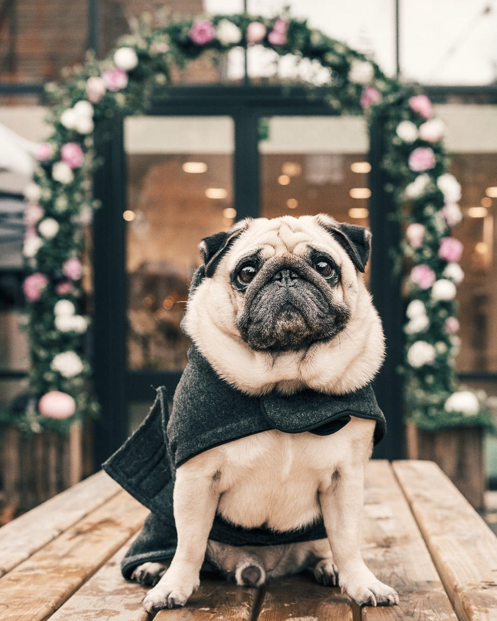 kuoser dog winter jackets