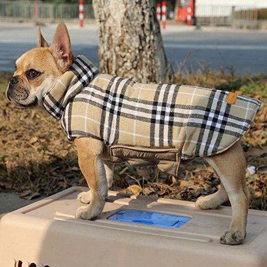 How To Choose The Best Winter Jacket For Your Dog?