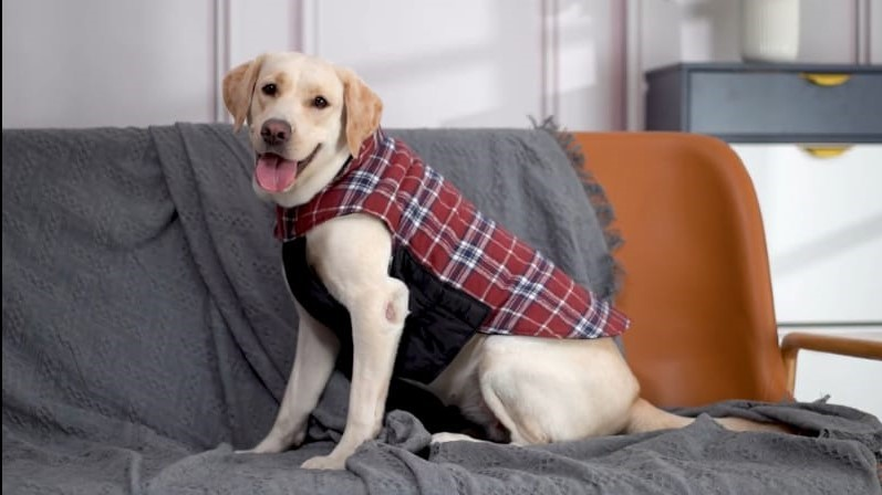 Waterproof dog jacket with insulated harness