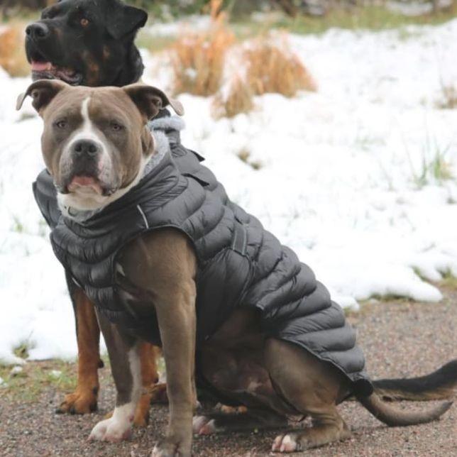 Windproof warm dog jacket with double wind belt