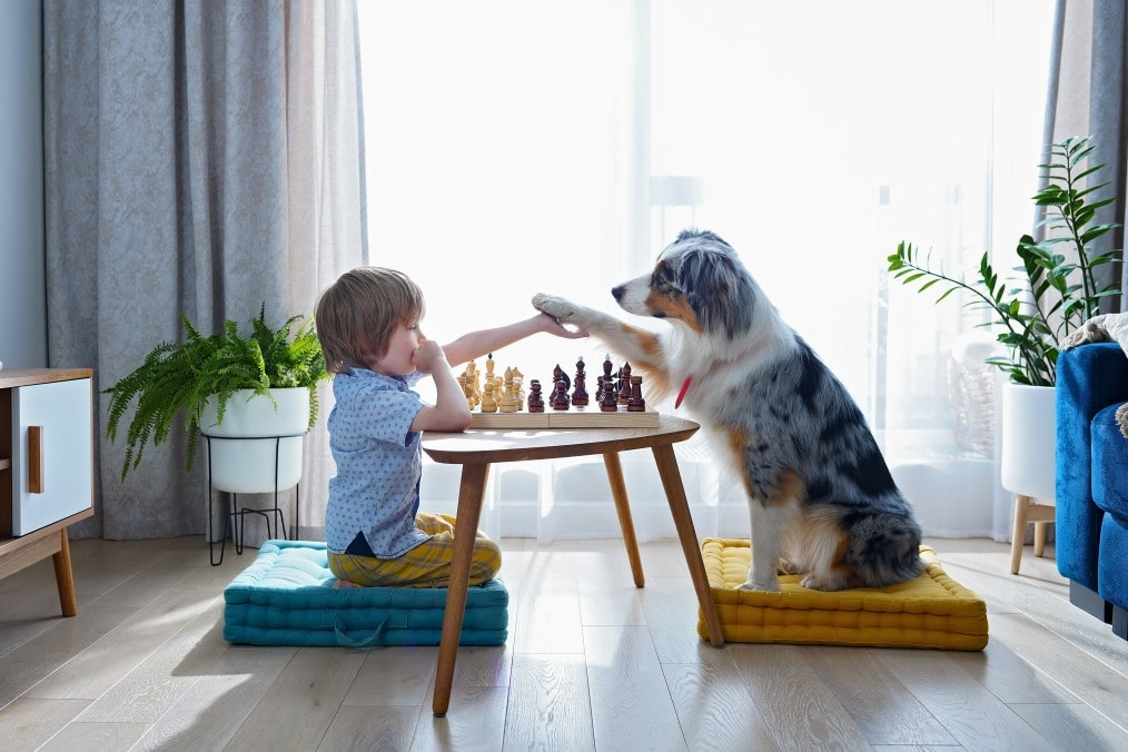 Best Fun Puzzle Games For You And Your Dog