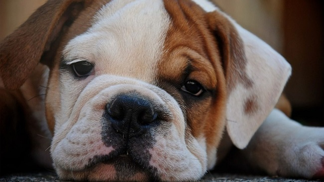 Dead Pet Dog Tests Positive For Coronavirus In Jersey, UK