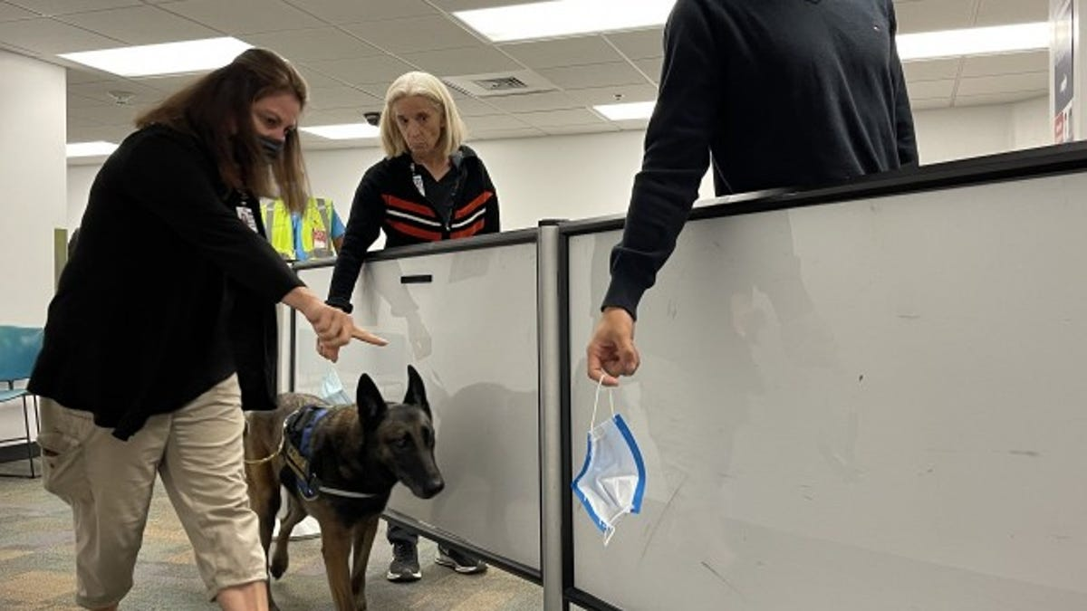 Dogs Who Can Detect Covid-19 Being Tested At Miami International Airport