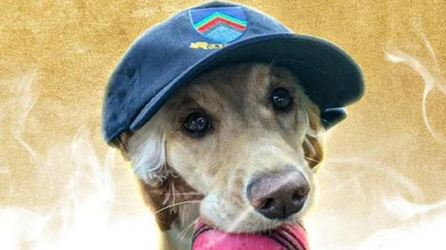 """ICC Announces """"Dog of the Month"""" Award"""