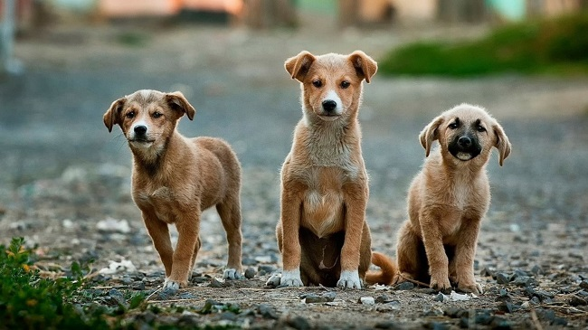 Mandatory Registration Of Pet Dogs In East Delhi