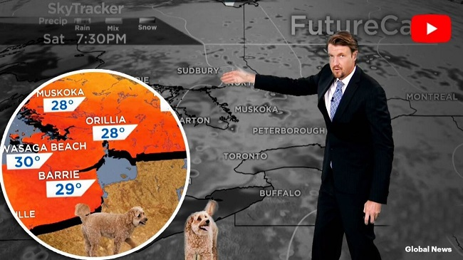 Meteorologist's Dog Interrupts The Weather Report At Global News Toronto