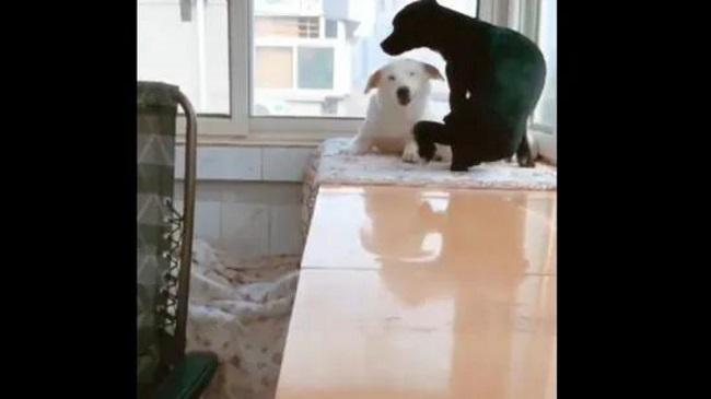 New Viral: Dad Dog Brings Treat, As Mom Dog Feeds Puppies