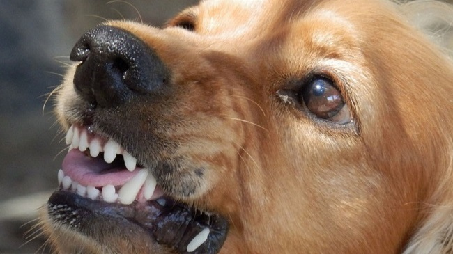 Punjab Records 14 Dog Bite Cases Every Hour Till July