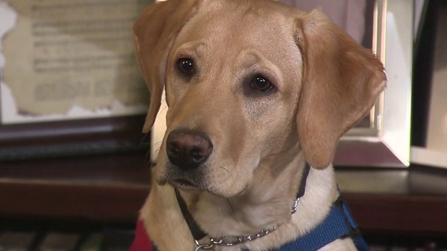 Service Dogs Paired With Veterans Suffering From PTSD In San Antonio