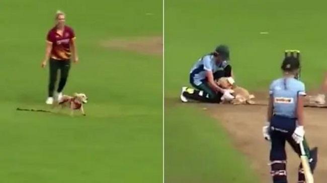 Watch: Dog Steals The Ball During A Cricket Match