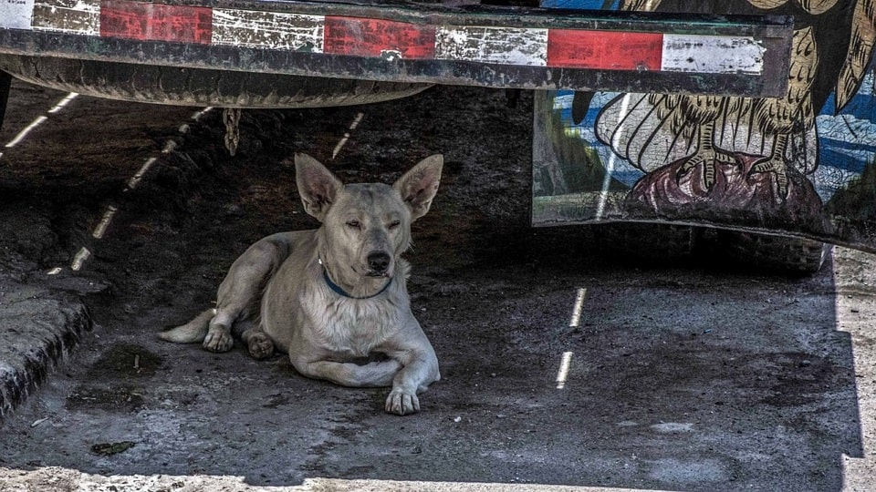 Youths Rescue Dog Dumped Roadside In Mangaluru, India