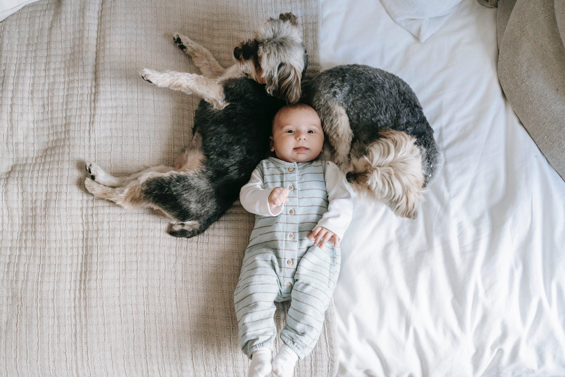 advantages-of-having-dog-for-kid
